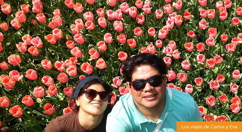 13-tulips