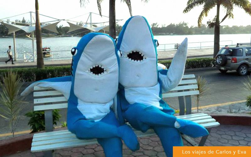02 sharks park