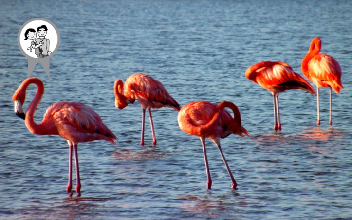 07 flamingos