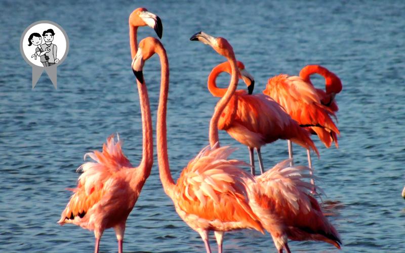 08 flamingos